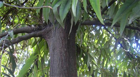 Maskot Tumbuhan dan Satwa dari Sulawesi Tengah