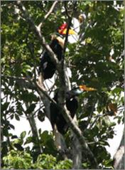 Gambaran Hutan Konservasi di Sulawesi Tengah | NoerDblog
