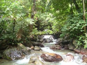 Daerah aliran sungai di wilayah KPH. Dampelas Tinombo