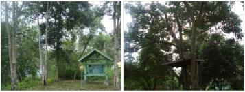 Tumbuhan di lokasi obyek wisata alam Kapopo